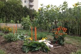 Ann Garden Pollinator 2012