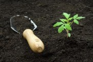 soil and seedling