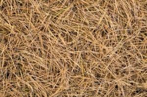 pine needle mulchg
